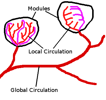 HB2 Global Local Circulation.png